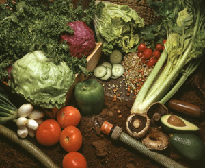 what types of organics can CleanWorld take